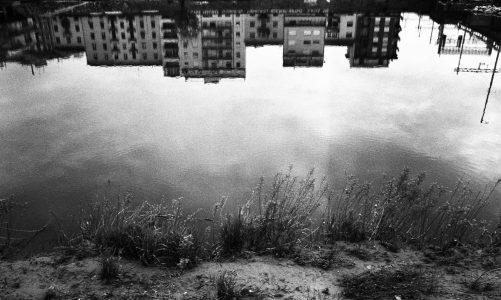A FOREST | Fabrizio Musu
